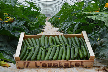minies-courgettes