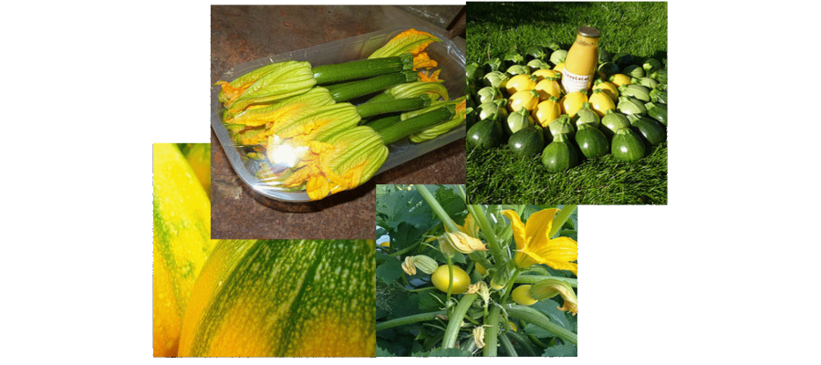 combo courgettes